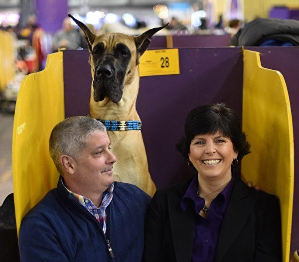 夫妇俩带着大丹犬来参赛。(TIMOTHY A. CLARY/AFP/Getty Images)