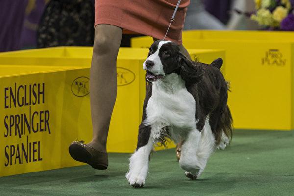 最后一轮比赛中的伯恩山犬。(Andrew Burton/Getty Images)