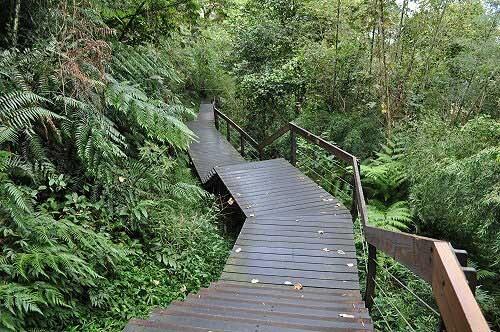 水蛙頭步道(圖片提供:tony)