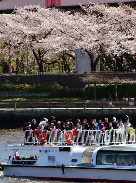 当地民众和观光客搭乘游艇,从东京隅田川上观赏沿岸的樱花。图片摄于4月7日(YOSHIKAZU TSUNO/AFP)