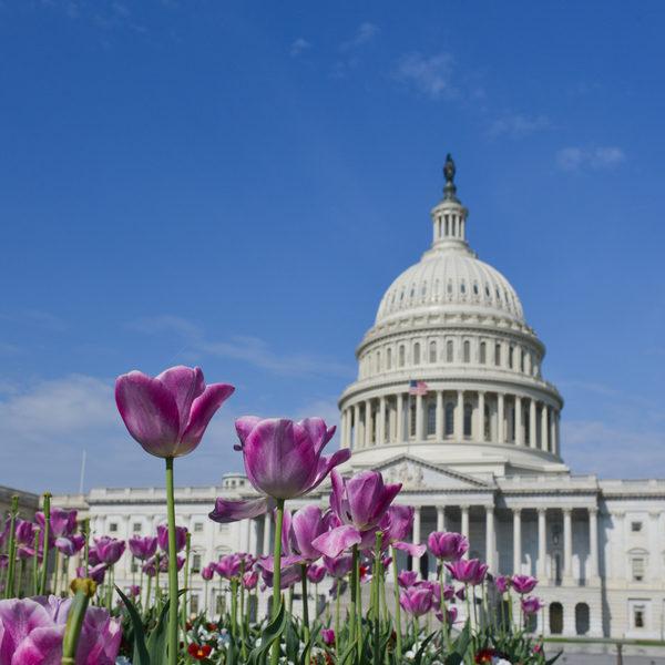 华盛顿哥伦比亚特区(Washington, D.C.)。(Fotolia)