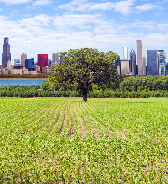 芝加哥,伊利诺州(Chicago)。(Fotolia)