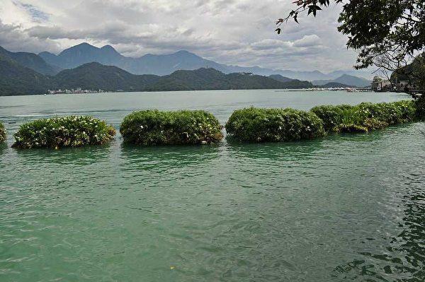日月潭浮嶼(2013年,拍攝地點:水社親水步道)。 (圖片提供:tony)