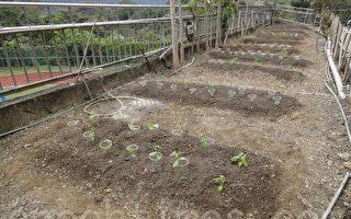 期望看着菜苗长大的同时,孩子也学会照顾农作物。(徐乃义/大纪元)