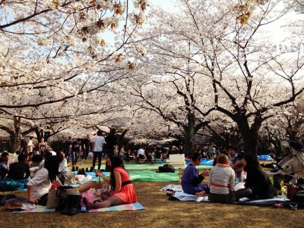 民众在东京代代木公园赏樱。(Karl Baron/Flickr)
