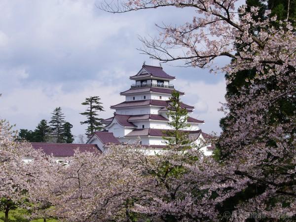 日本会津若松城樱花盛开。(Hiroaki Kaneko/Flickr)