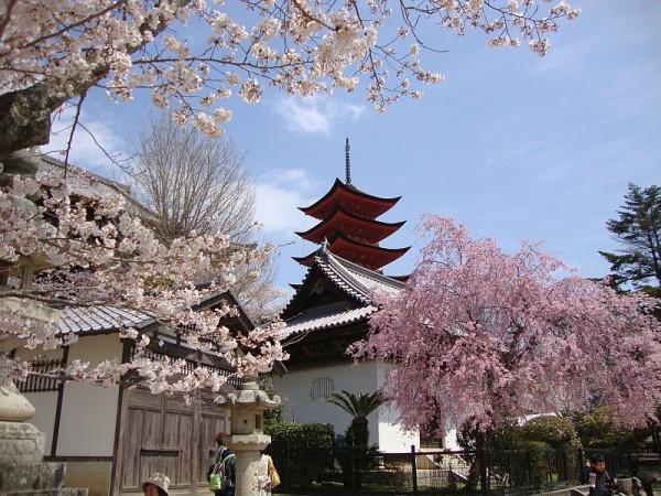 日本宫岛春季樱花盛开。(Jordan Emery/维基百科)