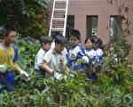 吉峰国小参加除草活动的小朋友卖力地除去入侵校园、攀爬到二楼高的小花蔓泽兰藤蔓。(邓玫玲/大纪元)