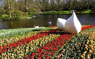 2015荷兰世界最大郁金香花园花季展(萧依然/大纪元)