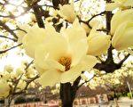 心中善念宛如一朵白莲花,招祥纳福。(大纪元)