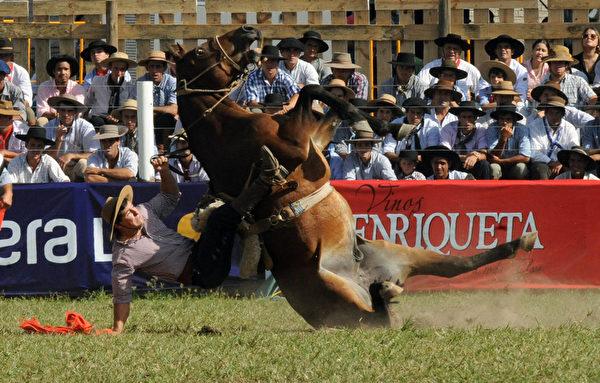 到底是谁在搏命演出?-----3月29日,一名高卓人在蒙得维的亚的传统牛仔竞技周中展示马技。(MIGUEL ROJO/AFP)