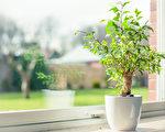 陽光讓綠葉們閃閃發亮,讓人倍感被「蔭護」的安寧。(fotolia)