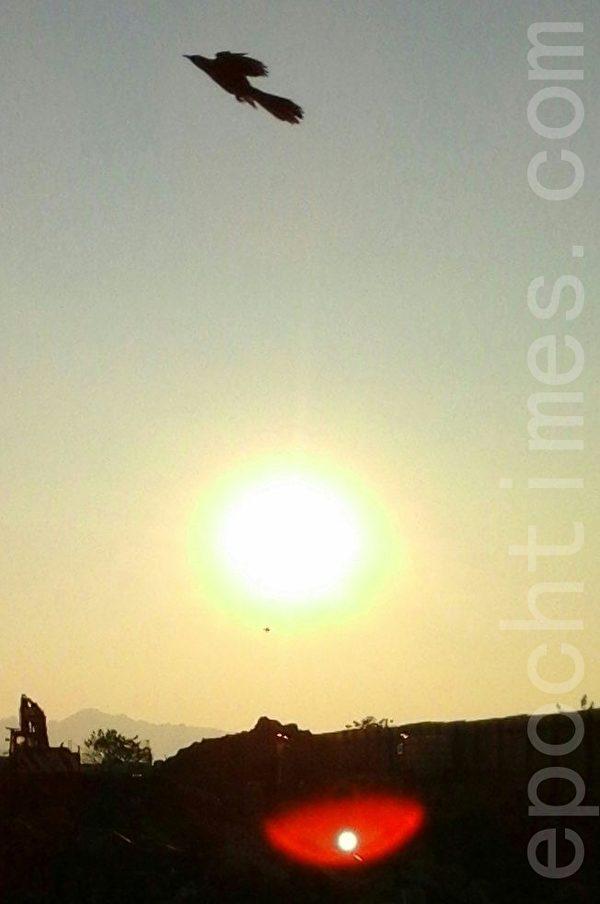 旭日边上出现了包着红晕光球,这个光球宛如另一个太阳,一直绕着太阳转动。(图:大法弟子/大纪元)