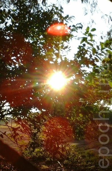 太阳上边出现一个清晰的红色光晕球,同时在太阳周边出现片片花瓣环绕般的景象。(图:大法弟子/大纪元)
