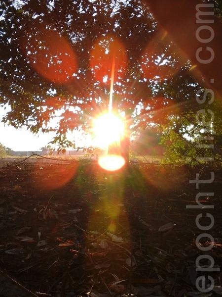 太阳周边出现清晰的片片花瓣形光晕环绕般的景象,整个光晕的组成就像一朵花一样。比较上图,可以发现红色光晕球此时出现在太阳下边,中心非常光亮。(图:大法弟子/大纪元)