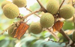 美丽心台湾:都市丛林里一处生机
