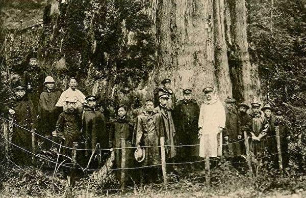 阿里山的檜木巨木。 (圖片提供:tony)