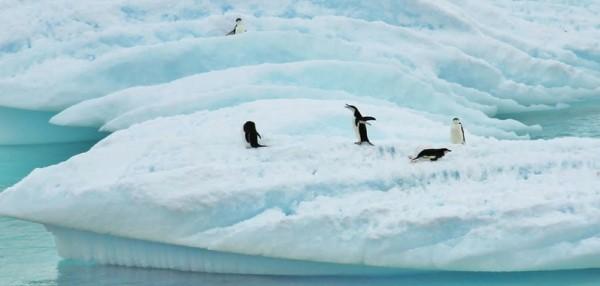 南极洲冬天企鹅(pixabay)