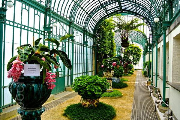 比利时皇家花园的温室中收集了各种奇花异草。 (萧依然/大纪元)