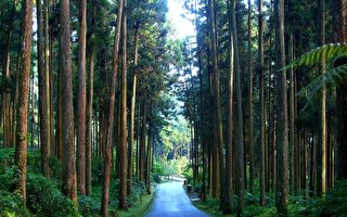 复兴国产材 台大实验林推展森林文化