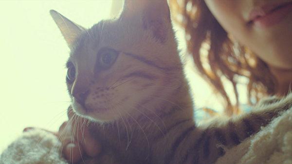 猫咪可爱又讨喜的模样。(采昌国际多媒体提供)