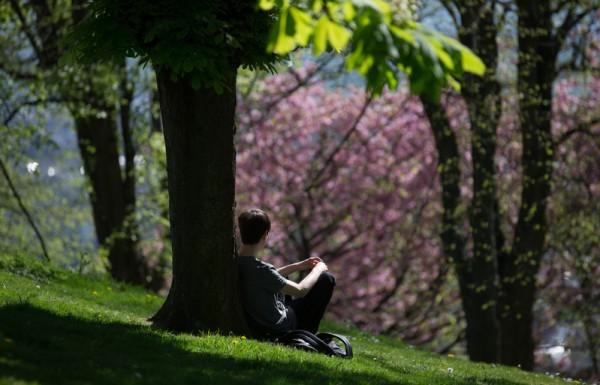 2015年4月22日,英国布兰登公园繁花盛开,民众在树下休息。(Matt Cardy/Getty Images)