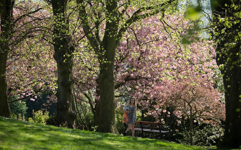 組圖:英國布蘭登公園繁花盛開