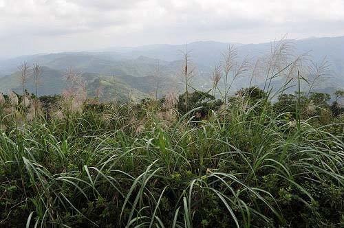 司公髻尾山是平溪第一高山,四周展望良好。(图片提供:tony)