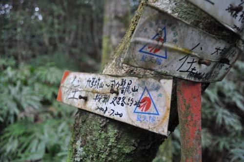 又遇岔路(直行为南势坑古道),取左行,脱离古道,爬往司公髻尾山。 岔路口的树干上,都有中华山岳蓝天队钉的登山指标。  (图片提供:tony)