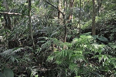 废弃的石头厝,隐身于树林草丛中。(图片提供:tony)
