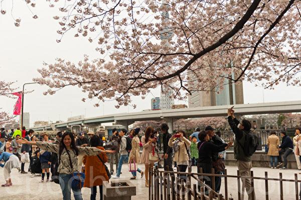 樱花盛开的时节,日本东京的街头、公园、河岸两旁处处都是赏樱的市民众和游客。(牛彬/大纪元)