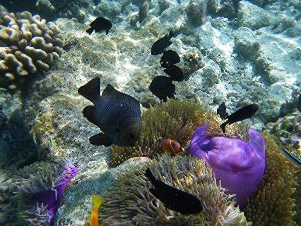 马尔代夫美丽的珊瑚礁和色彩斑斓的热带鱼。(yuqinxin/大纪元)