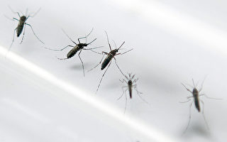 """人体""""臭臭基因""""易招来蚊子"""