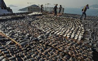 走私1.3万磅鱼翅到香港 加州华人被捕