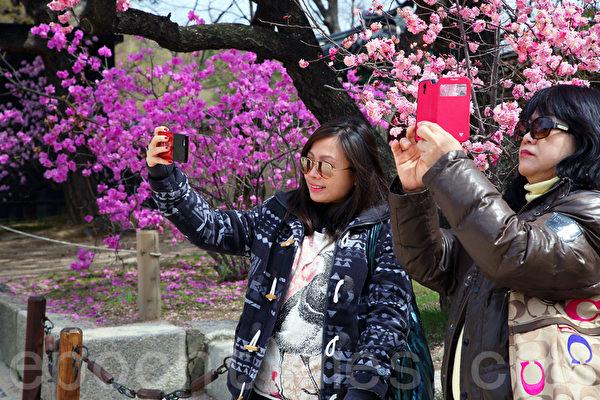 在韩国首尔观光的中国游客。(全宇/大纪元)
