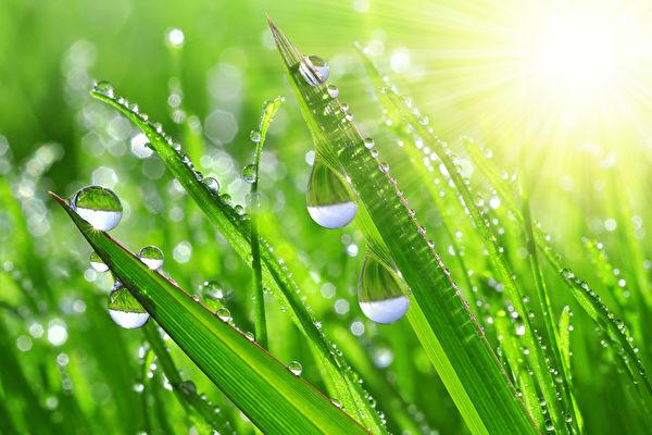 """立夏也是一个重要的节气,民间以立夏日的阴睛测一年的丰歉,认为立夏时下场雨最好,民谚云:""""立夏不下雨,犁耙高挂起""""。(fotolia)"""