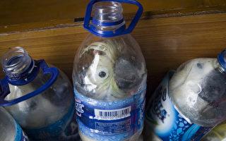 印尼濒危凤头鹦鹉被塞塑料瓶中走私