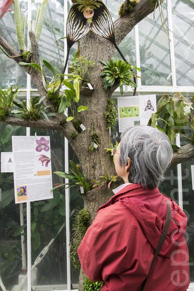 """金门公园温室花房的""""荒岛""""植物展。(杨帆/大纪元)"""