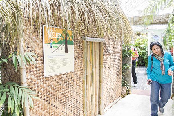 """2015年5月8日开始,旧金山金门公园温室花房开始了""""荒岛""""植物展。图为荒岛生存用的茅草屋。(杨帆/大纪元)"""