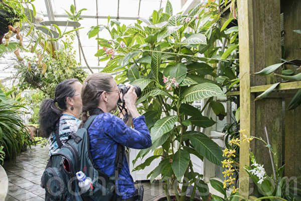 """2015年5月8日开始,旧金山金门公园温室花房开始了""""荒岛""""植物展。(杨帆/大纪元)"""