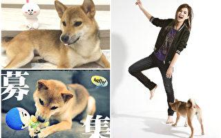 Ella當封面人物 帶愛犬「布丁」上鏡
