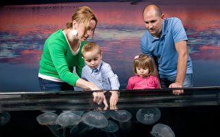 透明無毒的海月水母可是小朋友的最愛,在這裡可以盡情的觸摸。(大紀元)