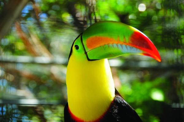 游客们可以在小岛上体验美丽的自然风光。(Anthony's Key提供)