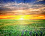美丽的早晨绿色领域与蓝色天堂(fotolia)