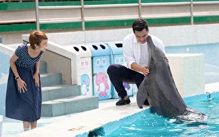 窦智孔黄姵嘉 与海豚玩亲亲