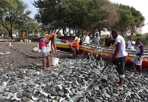 佛得角圣安唐岛的渔民在波多诺伏海滩处理鱼获。(DANIEL SLIM/AFP)