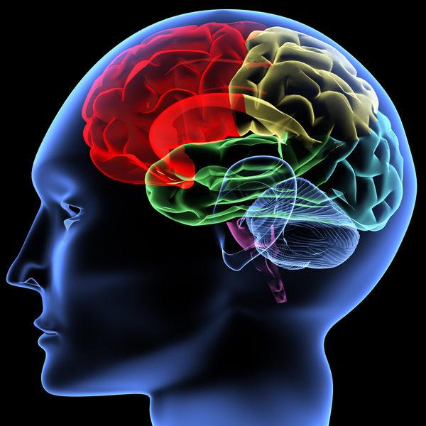 大脑模式图 (V. Yakobchuk/Fotolia)
