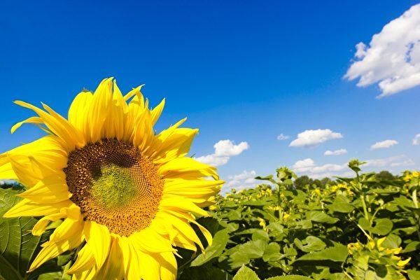 冬病夏治,治療的最佳時間是「三伏天」。(fotolia)