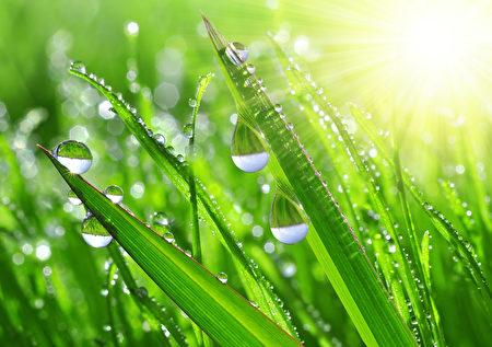 盛夏是出新在小暑以及立秋内,举凡同年被气温最高且又潮湿、闷热的生活。伏即吗潜伏的意思。(Fotolia)