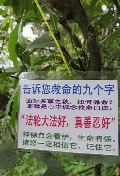 在雲南昆明某風景區,多處可以看到真相標語。(明慧網)